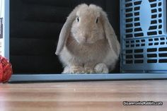 And the gate was opened, and I beheld a disapproving rabbit. And I trembled.