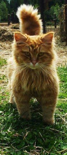 Your cat might suffer from joint pain. Find out the symptoms and get cure. Please visit out website to learn more!