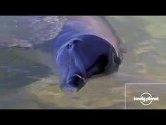 Freakin out here, but don't mind me. :D The dolphins of Monkey Mia, Australia - Lonely Planet travel video