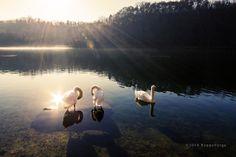 Parco del Ticino   Flickr – Condivisione di foto!