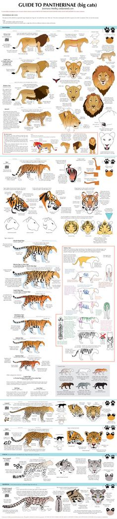 To see this chart in full size you'll need to go to my website. To buy a print, visit Redbubble. The full series (get the book! ): Guide to Pantherinae/Big cats Guide to Felinae/Little cats Guide t...