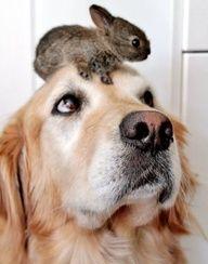 hare on my head :-)