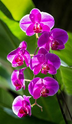 Orchids in the Garden. Fairchild Tropical Botanic Garden. | Flickr – Compartilhamento de fotos!