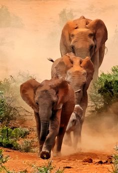 Elephant Stampede-Is this awesome or what?