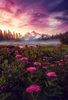 ~Mt. Shuksan, Washington~
