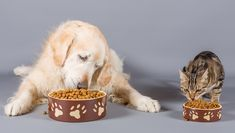 Can Dogs Eat Cat Food? Is Cat Food Safe For Dogs? Dog Breeds List, Cute Dogs Breeds, Pet Dogs, Dog Cat, Les Croquettes, Dog Nutrition, Can Dogs Eat, Puppy Food, Dog Eating