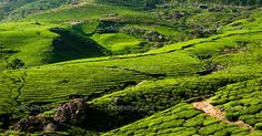South india tour and travel packages for foreigner tourists in India! #SouthIndiaTravel #SouthIndiaTourism #SouthIndiaTourPackages Mobile No.:- +91 9711885571 Email:- info@shaktatravels.com http://shaktatravels.com/destinations/india