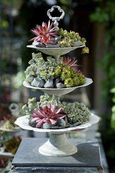 Die 169 Besten Bilder Von Garten Sukkulenten Planting Flowers