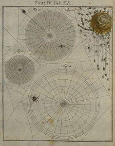 Spider webs (by Paul K) alias BibliOdyssey