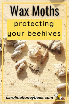 How To Start Beekeeping, Beekeeping For Beginners, Backyard Beekeeping, Chickens Backyard, Wax Moth, Bee Hives Boxes, Bee Facts, Cannabis Plant, Save The Bees