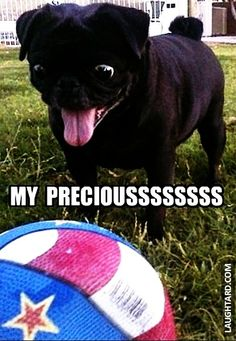 My Precioussssss #lol #laughtard #lmao #funnypics #funnypictures #humor