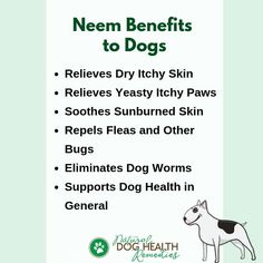 Benefits of neem for dogs are numerous. The leaves can be used to boost the immune system of dogs in general, and to repel intestinal parasites. Neem oil can also be used to treat skin problems, repel fleas, mosquitoes, and ticks. Neem Benefits, Health Benefits, Dog Illnesses, Worms In Dogs, Intestinal Parasites, Support Dog, Neem Oil, Body Detox, Natural Home Remedies