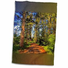 3dRose DYLAN SEIBOLD - PHOTOGRAPHY - FORESTED HILL TRAIL ... https://www.amazon.com/dp/B01MQ5TDYS/ref=cm_sw_r_pi_dp_x_pnIgybF0SRFK3