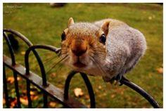 Squirrel__03__by_Manveru