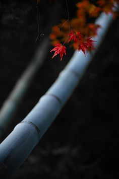Originally for the Japanese aesthetic wabi-sabi. Now also including samurai and other ancient Japanese subjects. Explore tags: what is wabi-sabi? Japanese Culture, Japanese Art, Japanese Maple, Kubo And The Two Strings, Foto Fun, Belleza Natural, Wabi Sabi, Belle Photo, Autumn Leaves