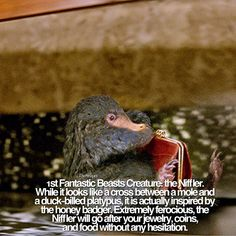 By @thesnapes on instagram GIVE CREDIT (tag me in the cap and post) IF YOU REPOST! — This is my first fact of my mini theme! I will reveal all 6 creatures that will be featured in Fantastic Beasts! PLEASE PLEASE give credit if you use these facts as I had to take a lot of time to find them ❤️❤️ - Credit to Warner Bros, Entertainment Weekly, and Comic Book Resources for pictures and information