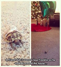 Awww HAHA this is adorable!!!! ---- the best part is the turtle's name is Franklin ^_^ Comment if you get it! :D