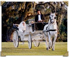 Google Image Result for http://www.palmettocarriage.com/images/weddingpic.png