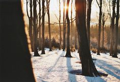 Image about photography in winter. Beautiful World, Beautiful Places, Beautiful Pictures, Beautiful Forest, Winter Love, Winter Snow, Winter Light, Winter Wear, Prince