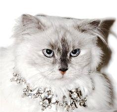 Couture Juicy Jewel-Laden gatos, con el fin de Actitud