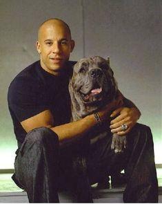Vin Diesel y su mastín italiano Román
