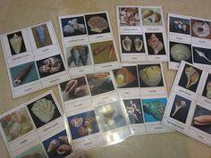 DIY local species id cards