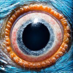"""Le photographe et scientifique arménien Suren Manvelyian réalise le projet """"Animal Eyes"""" en macro. Des images époustouflantes et très colorés des yeux d'animaux domestiques et sauvages."""