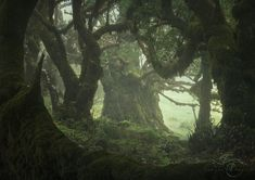 Dark Green Aesthetic, Nature Aesthetic, Forest Fairy, Fantasy Forest, Dark Forest, The Villain, Pretty Pictures, Aesthetic Pictures, Enchanted