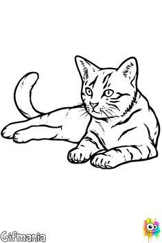 Dibujo, Cat Cat, Cómo Dibujar, Búsqueda De Imágenes, Mascotas, Animales,  Hecho A Mano, Paso A Paso, Canadá