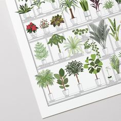 Make your house a little greener with this cheery chart of over a hundred popular potted plants! A veritable horticultural who's who, each leafy friend has been lushly illustrated and labeled with nomenclature both common and scientific. House Plants Hanging, House Plants Decor, Plant Decor, Common House Plants, Strange Flowers, Inside Plants, Herbal Magic, Walnut Stain, Nature Prints