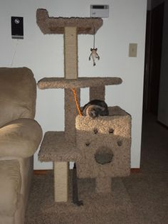 1000 Images About Cat Trees On Pinterest Homemade Cat