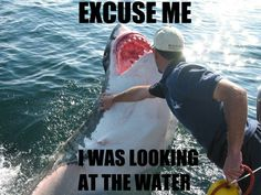 """Stop Trying to Photobomb, Shark! - Funny memes that """"GET IT"""" and want you to too. Get the latest funniest memes and keep up what is going on in the meme-o-sphere."""