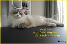 Auguri a tutte le ragatte da Ferdinand #festadonne #festa8marzo