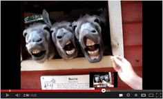 Oh! This is AWESOME! Top 10 Animales graciosos! Watch here: http://awesomeanimals001.blogspot.co.il/2013/04/oh-this-is-awesome-top-10-animales.html