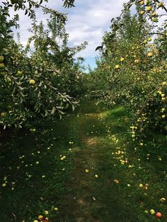 Apple picking and the Whole30