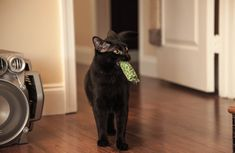 Have your feline to play fetch in eight easy steps.