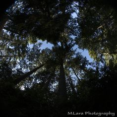 The forest through the eye of a fish.  Or is that through a fisheye?