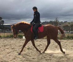 Ultimate Allrounder - Thoroughbred - Horsezone