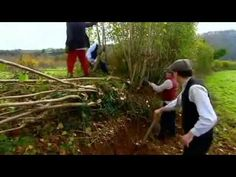 Segment from Edwardian Farm. Pleaching or plashing is a technique of interweaving living and dead branches through a hedge for stock control. Trees are . The BBC Farm series team recreates Edwardian rural life at Morwellham Quay, an historic quay in Devon (currently deleted from YT). Historic clips. The full .