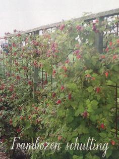 Afbeeldingsresultaat voor natuurlijke afscheiding tuin braam