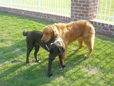 Special Needs Bonded Pair Blair Has Become The Friend And Guide Dog For Tanner They Both Need To Be Adopted Together They Need Blind Dog Dogs Street Dogs