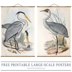 Free high-resolution over-sized vintage bird posters | The Painted Hive