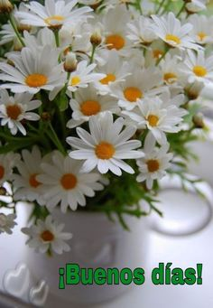 Cajas madera Beautiful Flower Arrangements, Floral Arrangements, Amazing Flowers, Beautiful Flowers, June Flower, Corporate Flowers, Daisy Love, Flower Phone Wallpaper, Deco Floral
