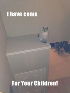 What an evil cat really looks and thinks