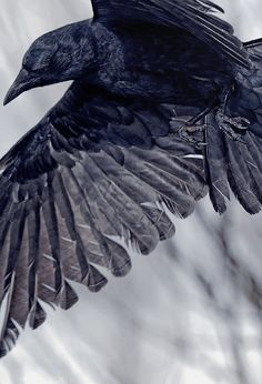 DarkBlackWolf • Posts Tagged 'dark'