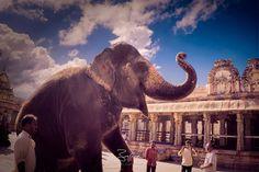 Happy Ganesh Chaturthi Lakshmi the #temple elephant from #Hampi | Hampi India | 2017 | #SonyA7ii #PhotoshopCC #TopazLabs  #binoygeorgephotography #incredibleindia #Karnataka #Culture #clouds #travelindia #_beyondpixels_  #architecture  #sonyalphain #travelphotography  #travel #unesco #worldheritage #elephant