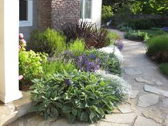 Mediterranean Garden in San Anselmo, CA - mediterranean - landscape - san francisco - Dig Your Garden Landscape Design Drought Resistant Landscaping, Drought Tolerant Landscape, Peterborough, Verge, Traditional Landscape, Garden Landscape Design, Landscape Designs, Interior Exterior, Lawn And Garden