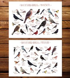 Midwest State Backyard Birds Art Print | Carefully painted in watercolor, this field guide art print fe... | Posters