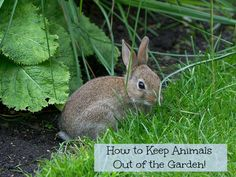 if you are wondering how to keep animals out of the garden here are a
