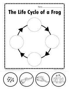 Make a flip book for life cycle of a frog (site also has